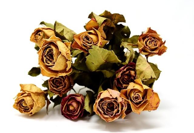 sušená květina
